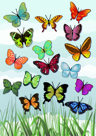 a variety of beautiful butterflies