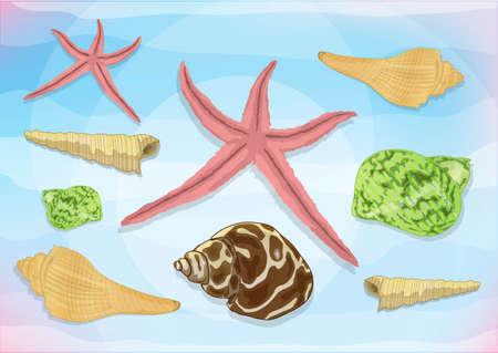 marine snail Stock Vector - 21511815