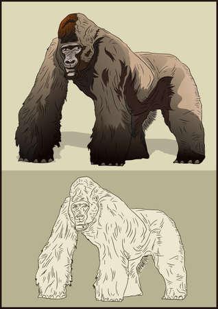 gorila:  animals are creepy
