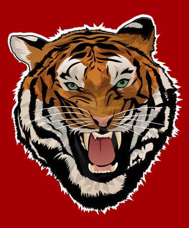 hoofd van de tijger