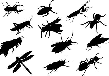 Beautiful silhouette of insect  Vector