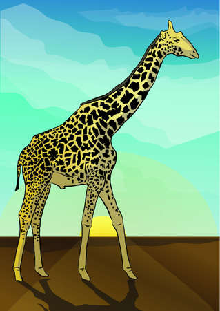 camelopardalis: the giraffe Illustration