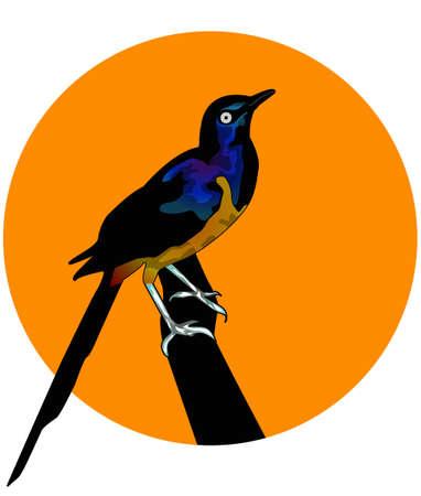 cut away: the cute bird