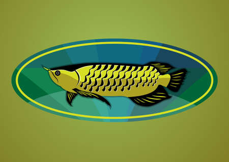 silver perch: Arwana fish from Indonesia Illustration