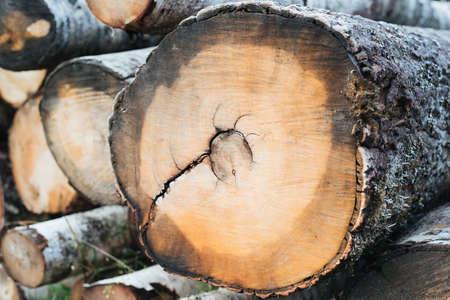 felled: Sawn trunk of a tree