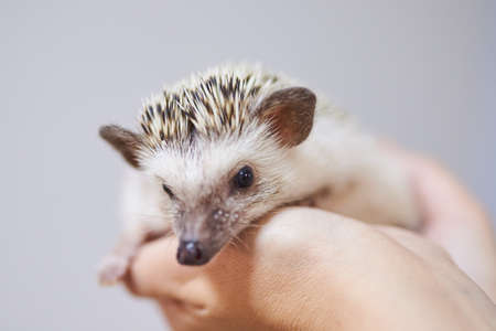 Cute decorative hedgehog on his handsFor all purposes
