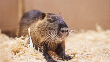 Nice,beautiful home nutria,petting zoo.For all purposes