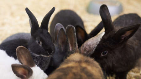 Group of different cute rabbits for any purpose