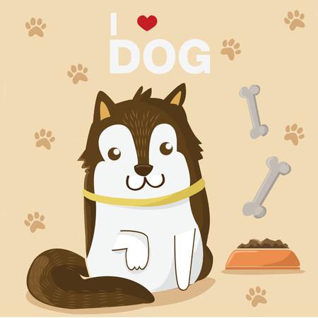 samoyed: my pet, siberia husky cute