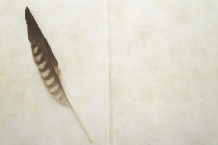 Antique book and hawk feather photo