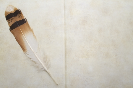 Antique book and bustard feather photo