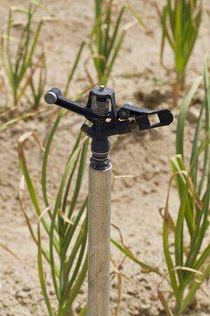 crop sprayer: Water sprinkler in onion field