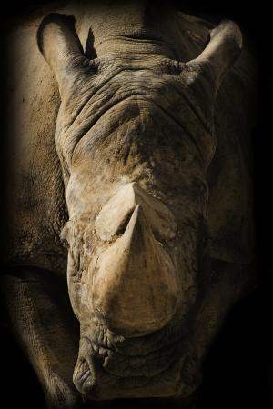 Rhino portret op donkere achtergrond Stockfoto