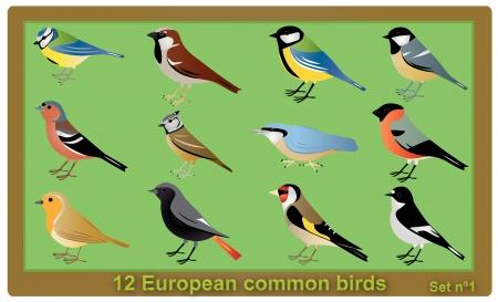 caeruleus: European common birds illustration Illustration