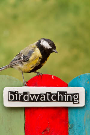 birdwatching: Great Tit perched on a fence decorated with the word birdwatching Stock Photo