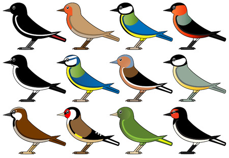 pied: European common birds Illustration