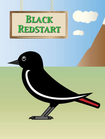 european alps: Natural Black redstart illustration on background