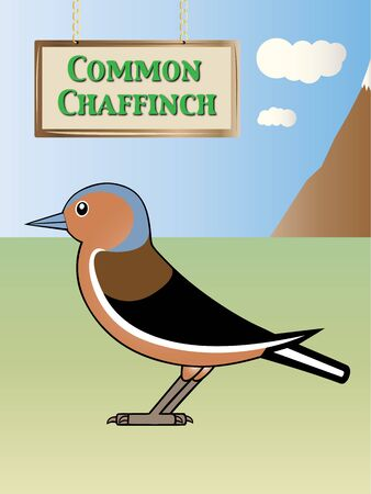 eurasian: Eurasian Natural chaffinch on background illustration