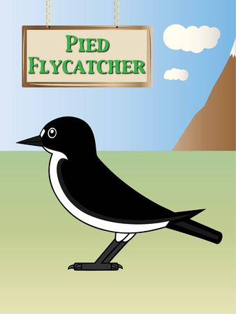 pied: European pied flycatcher nature illustration on background