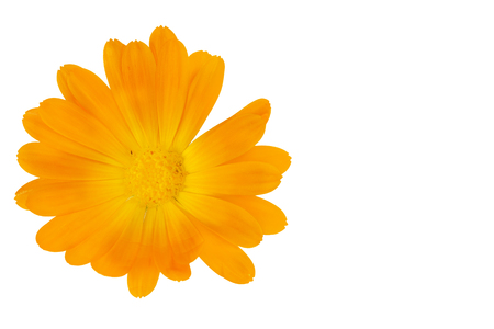 Calendula officinalis flower isolated on white with copy space on the right Archivio Fotografico