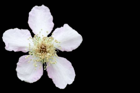 White flower isolated on white