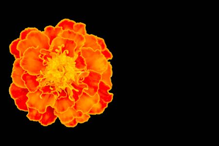 Yellow, red and orange flower isolated on black