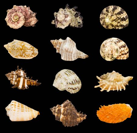 Group of seashell isolated on black Archivio Fotografico