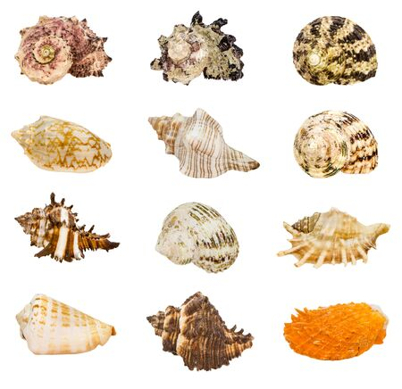 Group of seashell isolated on white