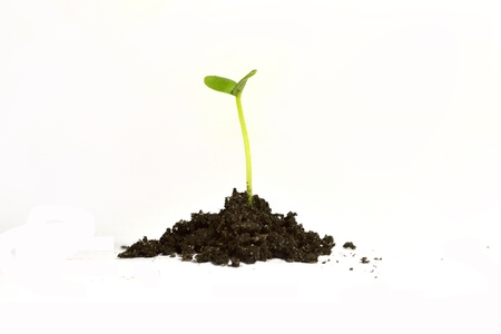A small sprout and soil on white background.