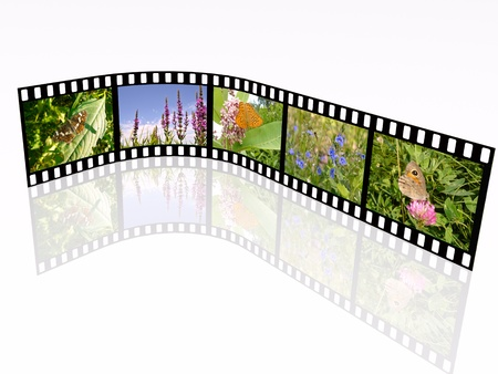 Film roll with color pictures on white background. photo