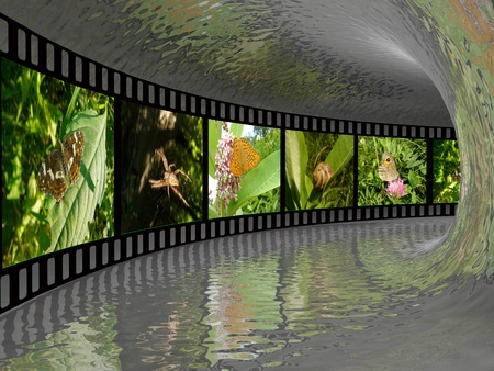 herbage: Film roll with color pictures (nature) in the tunnel. Stock Photo