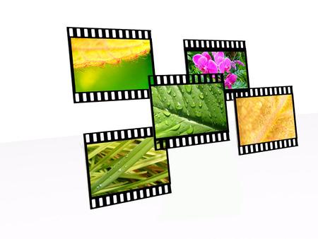 folliage: Frames with nature shots - ecology background.