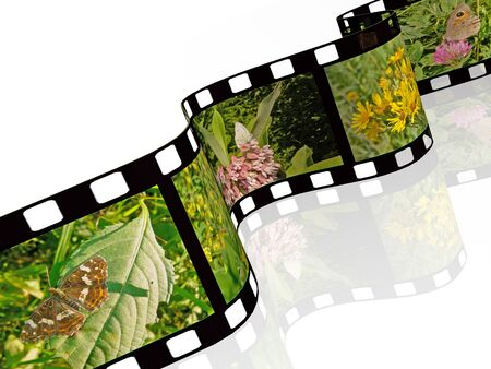 own: Film roll with color pictures (nature) on white background, 3D illustration. All pictures are my own photos.