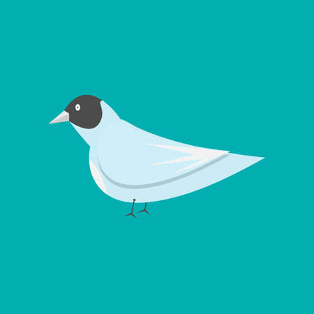 A Vector flat bird isolated on a blue background.
