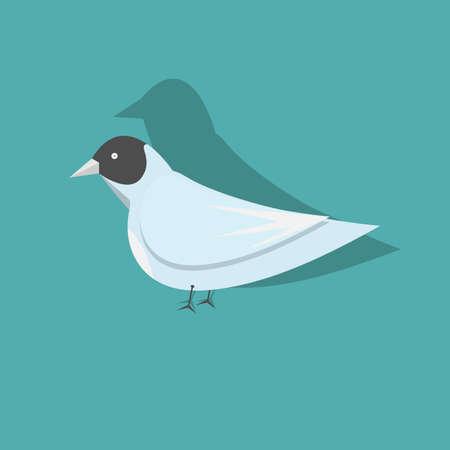 A Vector bird isolated on a blue background.