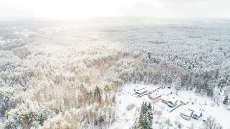 winter scene in forest from high view
