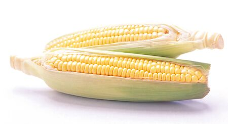 two sweet corns isolated on white background
