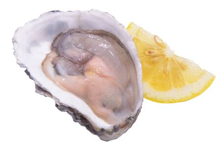 oyster and lemon isolated on white background Stock Photo - 10334157