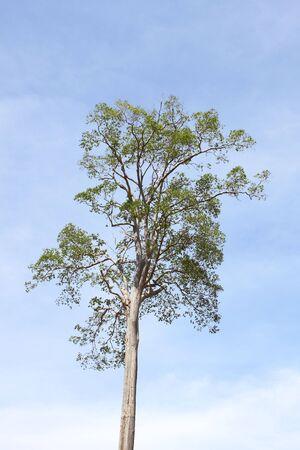 Tree Primo posto, mediterranean building style, thailand  photo