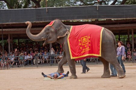 The famous elephant show in Nong Nooch tropical garden in Pattaya, Thailand