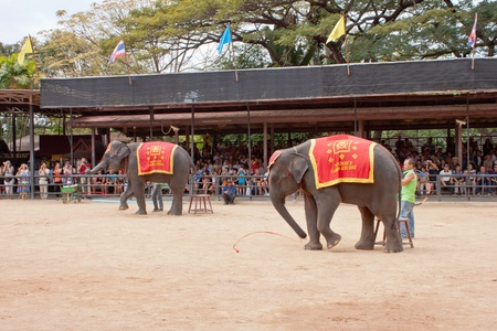 show garden: The famous elephant show in Nong Nooch tropical garden in Pattaya, Thailand Editorial