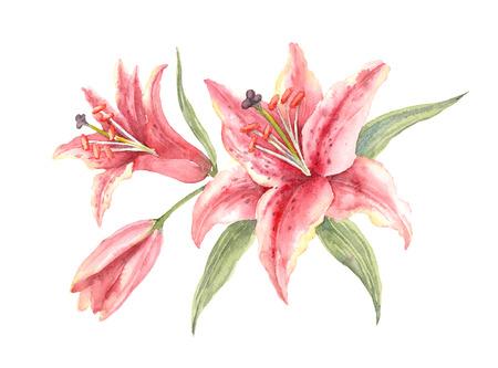 Bush Pink Stargazer Lilies sobre un fondo blanco. Ilustración de acuarela. Foto de archivo