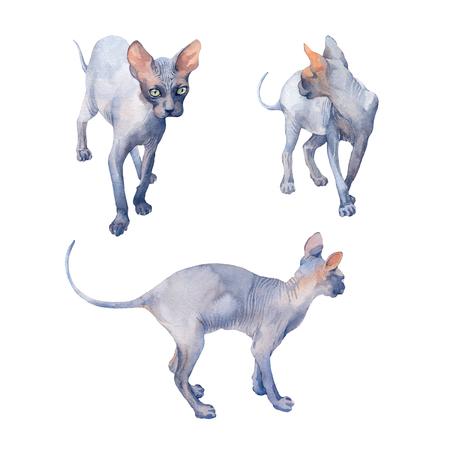 Conjunto de gato azul Sphynx con ojos verdes atentos mirando sobre un fondo blanco. Ilustración de acuarela.