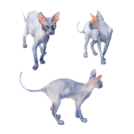 Set of Blue Sphynx Cat with green eyes attentive looking on a white background. Watercolor illustration .