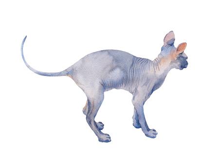 Gato Sphynx azul con ojos verdes de pie de perfil. Ilustración acuarela sobre fondo blanco.