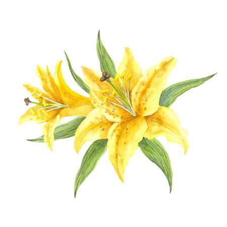 Oriental Trumpet Lilium 'Manissa'. Bush yellow lilies on a white background. Watercolor illustration. Stock Photo