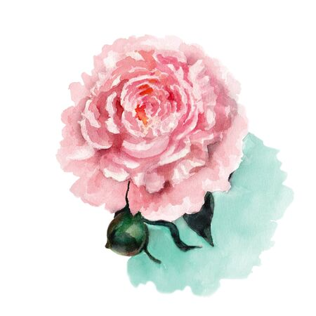 Sarah Bernhardt Peony. Pink peony with large double flowers. Watercolor illustration. Imagens