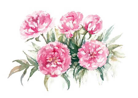 Walter Faxon Peony. Bouqet of vivid pink peonies with double flowers. Watercolor illustration.