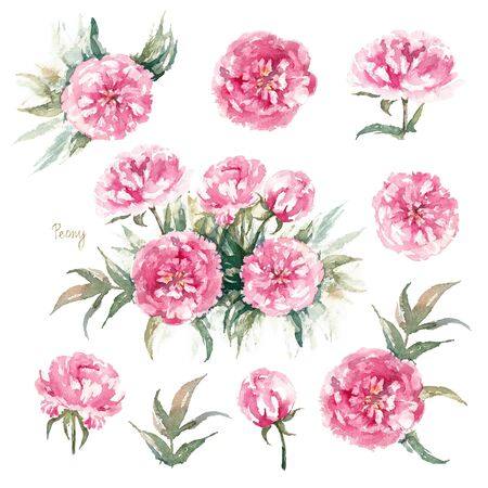 Walter Faxon Peony. Isolated set of vivid pink peonies with double flowers, buds and leaves. Vintage greeting card. Watercolor illustration. Imagens