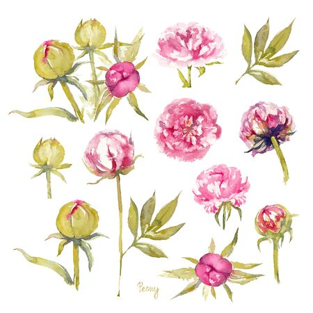 Peony Dr. Alexander Fleming. Isolated set of vivid pink peonies with double flowers, buds and leaves on a white background. Watercolor illustration. Imagens